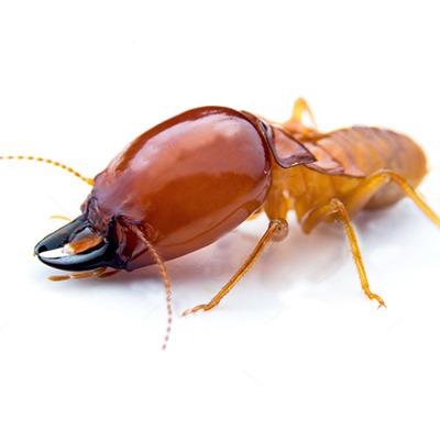 Elite Pest Control - Elite Termite Control